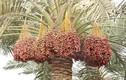 Chiêm ngưỡng hình dáng các hoa quả quen thuộc trước khi thu hoạch
