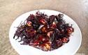 Kinh hãi với món đặc sản từ bọ hung ở Nghệ An