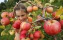 5 thực phẩm mùa thu có lợi ích sức khỏe tinh thần