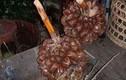 Quả dừa nước xấu xí nhưng là đặc sản ngon nức tiếng miền Tây