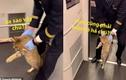 Video: Mèo bị đuổi khỏi tàu cao tốc vì không có vé