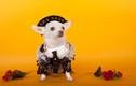 Chết mê những chú chó đáng yêu diện trang phục ngộ nghĩnh