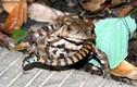 Những màn săn giết ghê rợn trong vương quốc động vật