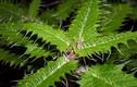 Chết khiếp loài cây siêu độc ăn mòn con người