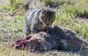 Những cảnh tượng kinh hoàng trong thế giới động vật hoang dã