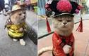 """Gặp chú mèo """"hoàng thượng"""" VN nổi tiếng thế giới"""