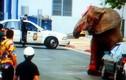 Ngược đãi, lạm dụng voi khổng lồ, huấn luyện viên trả giá kinh hoàng