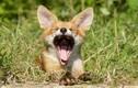"""""""Bắt quả tang"""" khoảnh khắc khó tin của động vật hoang dã"""