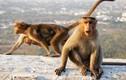 Mẹ bất lực nhìn con khỉ hoang bắt bé sơ sinh khỏi tay