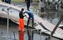 Phẫn nộ cảnh xẻ thịt cá voi công khai trên cảng