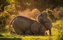 Anh em voi khổng lồ đùa nhau dưới nắng đẹp như tranh vẽ
