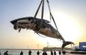 Cá voi khổng lồ trôi nổi, chết bất thường gây hãi hùng