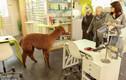 """Độc đáo lạc đà Alpaca """"xông pha"""" vào cửa hàng chọn kính"""