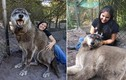 Chó sói khổng lồ bị ung thư và cái kết đẹp