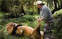 """Khoảnh khắc ấm lòng khi động vật hoang dã bên """"cha"""" người"""