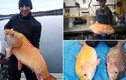 """Bắt được cá vàng """"thành tinh"""" gần 100 tuổi, dài cả mét"""