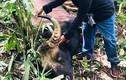Phát hiện bò tót 800kg chết trong KBT thiên nhiên Đồng Nai