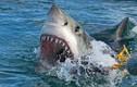 """Câu được """"quái thú"""" cá mập cực khỏe, ngư dân gặp điều kinh dị"""