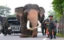 """Choáng đội quân vũ trang """"khủng"""" bảo vệ voi cao nhất Sri Lanka"""