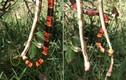 Choáng váng hỗn chiến rắn san hô, rắn chuột và ong vò vẽ