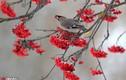 Ngỡ ngàng chim sẻ tụ tập ăn quả mọng đẹp như tranh vẽ