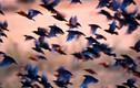 Cái chết thảm khốc của 300 con chim và bí ẩn gây tò mò