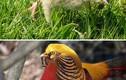 """Choáng váng những loài chim """"dậy thì thành công"""", đẹp mê mẩn"""