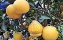 Độc đáo thị trường bưởi bonsai hình hồ lô dịp Tết Canh Tý 2020