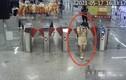Xé quần áo livestream để lộ vùng kín nơi công cộng, cô gái nhận kết đắng