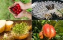 """12 loại thực phẩm cực nguy hiểm, có thể trở thành """"sát thủ"""""""