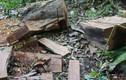Sử dụng gỗ đốn hạ cây xanh đô thị làm bàn ghế trong công viên