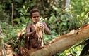 Kinh ngạc bộ tộc ăn thịt người, sống trên cây