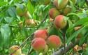 Đặt 6 loại trái cây này trong nhà giúp vượng khí phong thủy