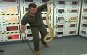 Video: Con rắn cực độc, có thể đoạt mạng 100 người chỉ bằng một vết cắn