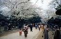 Ảnh tuyệt đẹp đất nước Nhật Bản sau Chiến tranh thế giới 2