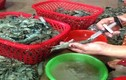 Bơm chích tạp chất vào tôm, 2 đối tượng bị phạt gần 200 trăm triệu đồng