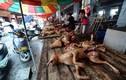 Luật hóa cấm ăn thịt chó ở nước ngoài: Những điều chưa biết