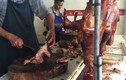 """Vì sao người Việt có thói quen ăn thịt chó """"giải đen""""?"""