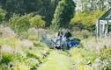 Vợ chồng giám đốc bỏ phố về quê xây khu vườn tuyệt đẹp