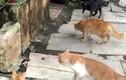 """Kịch tính 4 mèo nhà hợp sức """"dằn mặt"""" rắn hổ mang"""