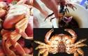 Những loài cua biển gây ngộ độc chết người ở VN