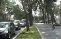 Đốn hạ, di dời 300 cây xanh trên đường Tôn Đức Thắng