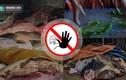 Lộ nguyên nhân thực phẩm bẩn hoành hành ngang ngược ở VN