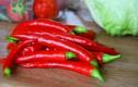 7 bài thuốc từ ớt chữa bệnh cực hiệu quả