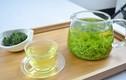 Lợi ích tuyệt vời của trà cây rừng với sức khỏe