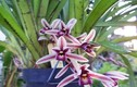 Công dụng chữa bệnh thần kỳ của các loại hoa lan