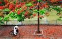 """Nhà thơ Thanh Tùng và mối tình đắm đuối """"Thời hoa đỏ"""""""
