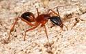 Chỉ mặt những côn trùng gần người là sát thủ khét tiếng