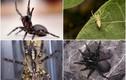 Sửng sốt trước những điều kỳ lạ chỉ có ở loài nhện
