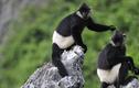 Khám phá những điều kỳ bí nhất ở vườn quốc gia Cúc Phương